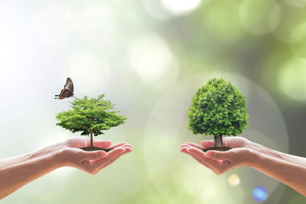 Ekologiczne środki czystości.